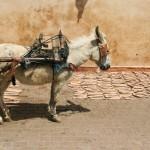 donkey Souks Marrakesh