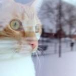 Lytro in the snow
